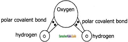 Samacheer Kalvi 11th Chemistry Guide Chapter 10 Chemical Bonding 20