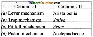 TN Board 12th Bio Botany Important Questions Chapter 1 Asexual and Sexual Reproduction in Plants 11