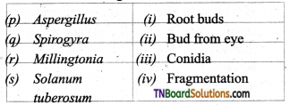 TN Board 12th Bio Botany Important Questions Chapter 1 Asexual and Sexual Reproduction in Plants 2