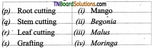 TN Board 12th Bio Botany Important Questions Chapter 1 Asexual and Sexual Reproduction in Plants 3