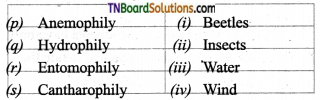 TN Board 12th Bio Botany Important Questions Chapter 1 Asexual and Sexual Reproduction in Plants 7