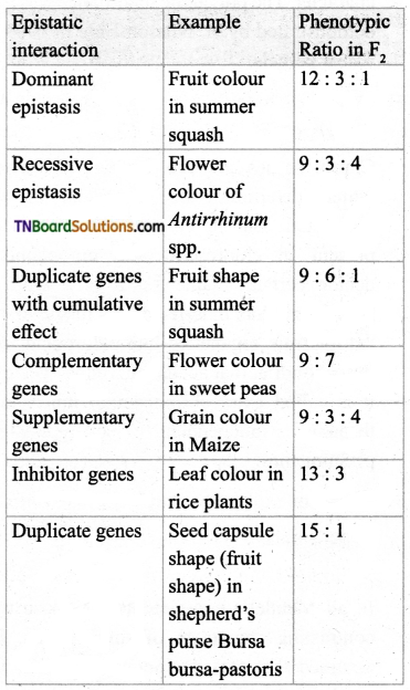 TN Board 12th Bio Botany Important Questions Chapter 2 Classical Genetics 3