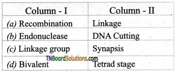 TN Board 12th Bio Botany Important Questions Chapter 3 Chromosomal Basis of Inheritance 11
