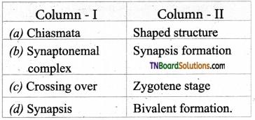 TN Board 12th Bio Botany Important Questions Chapter 3 Chromosomal Basis of Inheritance 12