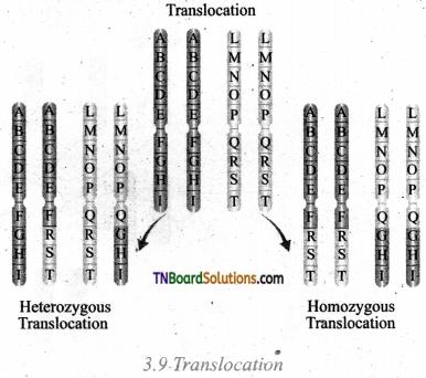 TN Board 12th Bio Botany Important Questions Chapter 3 Chromosomal Basis of Inheritance 5