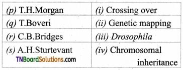 TN Board 12th Bio Botany Important Questions Chapter 3 Chromosomal Basis of Inheritance 6