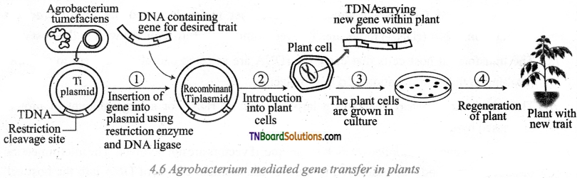 TN Board 12th Bio Botany Important Questions Chapter 4 Principles and Processes of Biotechnology 4