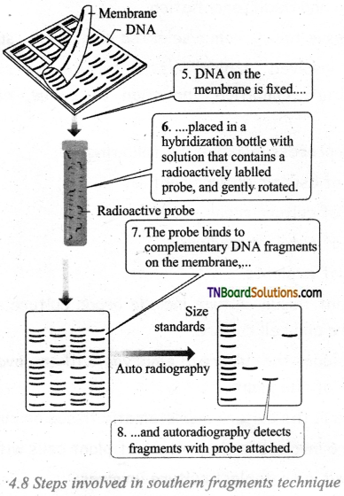 TN Board 12th Bio Botany Important Questions Chapter 4 Principles and Processes of Biotechnology 8