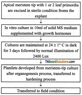 TN Board 12th Bio Botany Important Questions Chapter 5 Plant Tissue Culture 2