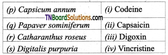 TN Board 12th Bio Botany Important Questions Chapter 5 Plant Tissue Culture 5