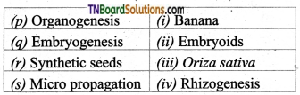 TN Board 12th Bio Botany Important Questions Chapter 5 Plant Tissue Culture 6