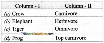 TN Board 12th Bio Botany Important Questions Chapter 7 Ecosystem 12