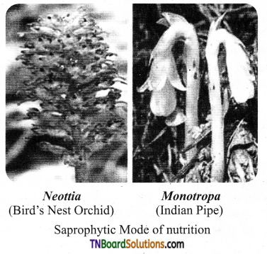 TN Board 11th Bio Botany Important Questions Chapter 12 Mineral Nutrition 5