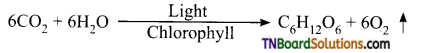 TN Board 11th Bio Botany Important Questions Chapter 13 Photosynthesis 1