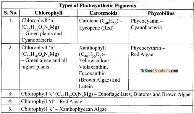 TN Board 11th Bio Botany Important Questions Chapter 13 Photosynthesis 3