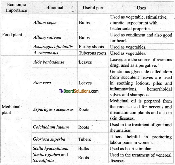 TN Board 11th Bio Botany Important Questions Chapter 5 Taxonomy and Systematic Botany 1