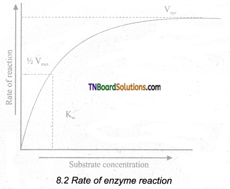 TN Board 11th Bio Botany Important Questions Chapter 8 Biomolecules 2