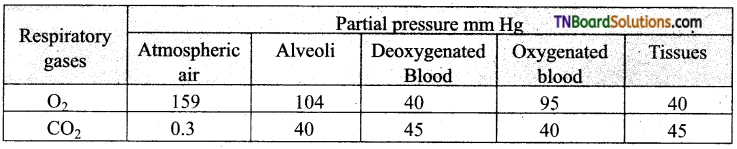 TN Board 11th Bio Zoology Important Questions Chapter 6 Respiration 1