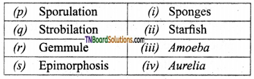 TN Board 12th Bio Zoology Important Questions Chapter 1 Reproduction in Organisms 10
