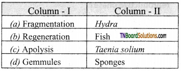 TN Board 12th Bio Zoology Important Questions Chapter 1 Reproduction in Organisms 14