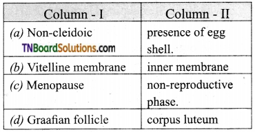 TN Board 12th Bio Zoology Important Questions Chapter 2 Human Reproduction 10