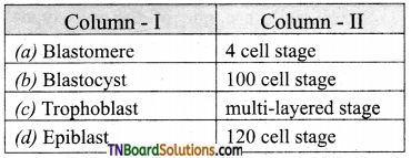 TN Board 12th Bio Zoology Important Questions Chapter 2 Human Reproduction 11