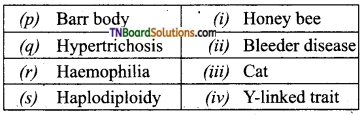 TN Board 12th Bio Zoology Important Questions Chapter 4 Principles of Inheritance and Variation 5