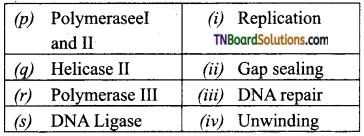 TN Board 12th Bio Zoology Important Questions Chapter 5 Molecular Genetics 6