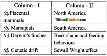 TN Board 12th Bio Zoology Important Questions Chapter 6 Evolution 11