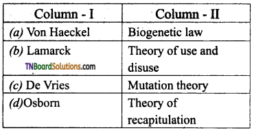 TN Board 12th Bio Zoology Important Questions Chapter 6 Evolution 9
