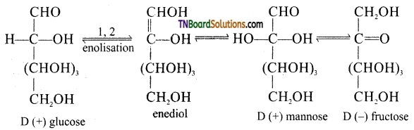TN Board 12th Chemistry Important Questions Chapter 14 Biomolecules 11