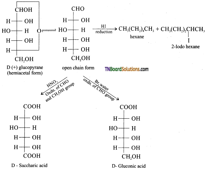 TN Board 12th Chemistry Important Questions Chapter 14 Biomolecules 13