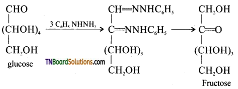TN Board 12th Chemistry Important Questions Chapter 14 Biomolecules 14