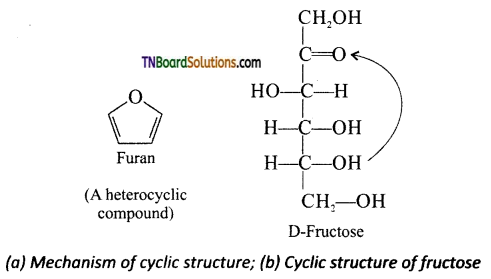 TN Board 12th Chemistry Important Questions Chapter 14 Biomolecules 18