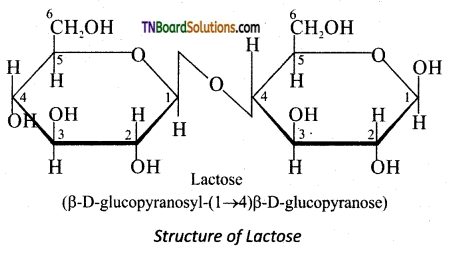 TN Board 12th Chemistry Important Questions Chapter 14 Biomolecules 21