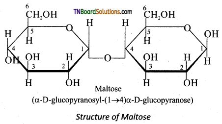 TN Board 12th Chemistry Important Questions Chapter 14 Biomolecules 22