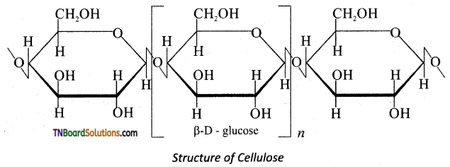 TN Board 12th Chemistry Important Questions Chapter 14 Biomolecules 23
