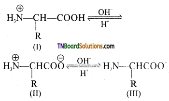 TN Board 12th Chemistry Important Questions Chapter 14 Biomolecules 25