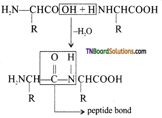 TN Board 12th Chemistry Important Questions Chapter 14 Biomolecules 26