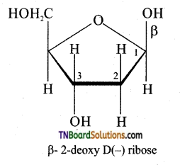 TN Board 12th Chemistry Important Questions Chapter 14 Biomolecules 31